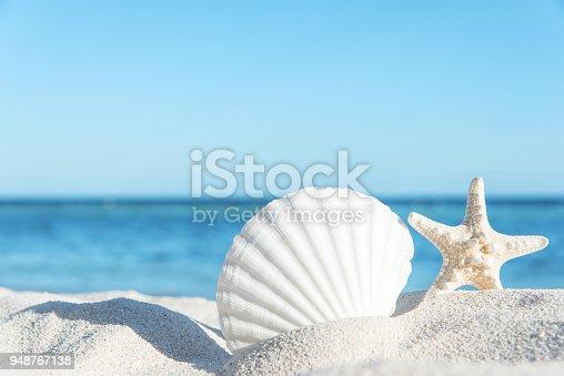 Summer Beach Seashell Background