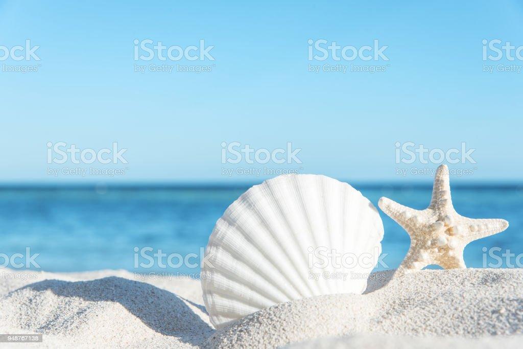 Summer Beach Seashell Background stock photo