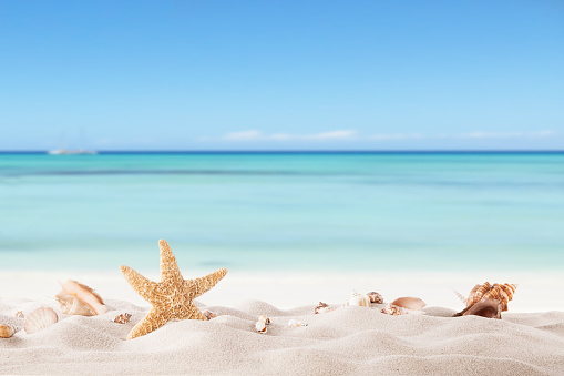 istock Summer beach with strafish and shells 498168409