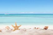 夏のビーチで strafish 、シェル