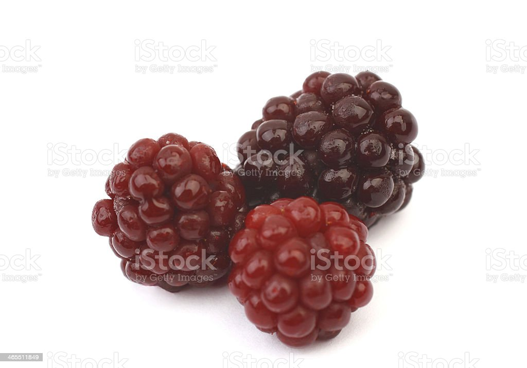 Summer berries stock photo