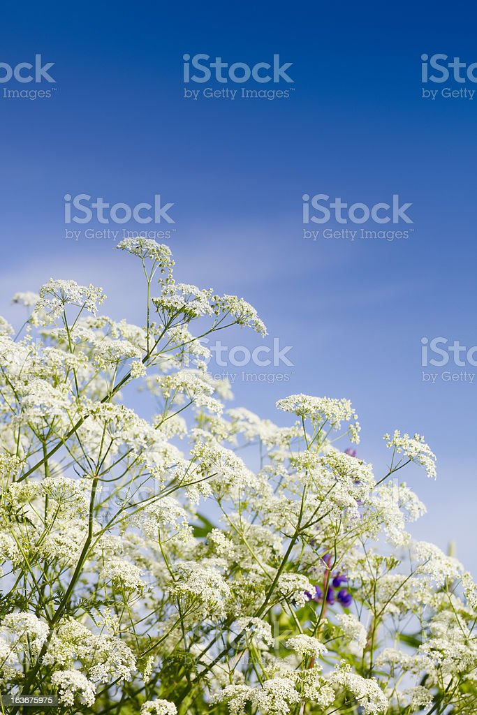 Summer bloom royalty-free stock photo