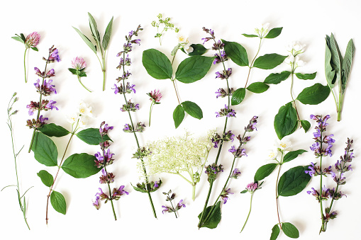 Summer botanical floral composition, pattern. Blooming sage, elderflower, pink clover and mock-orange flowers, leaves isolated on white table background. Herbs styled photograhy. Flat lay, top view
