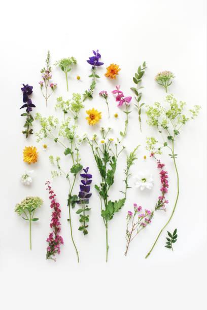 夏季植物圖案。花的成分少少,艾裡卡,聖人和菊花花和綠色煉金術植物在白色木制背景。樣式庫存照片。平鋪,頂視圖,垂直 - 草本植物 個照片及圖片檔