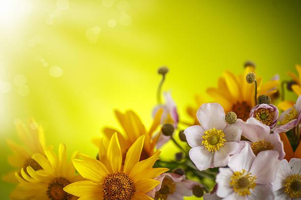 summer bouquet of yellow daisies - thank you background stok fotoğraflar ve resimler
