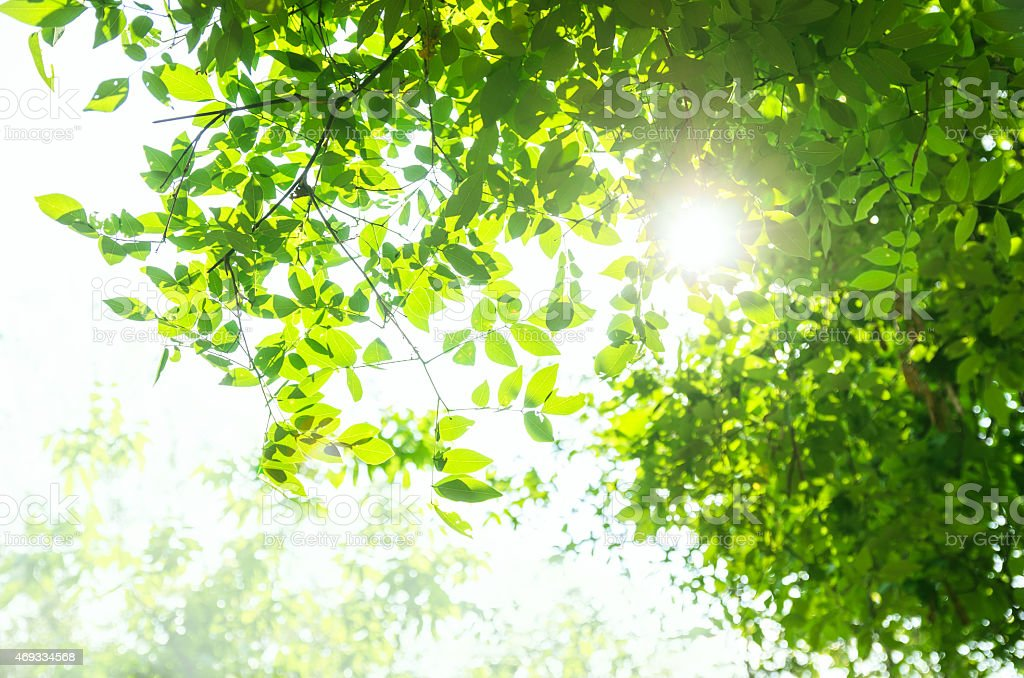 Summer branch with fresh green leaves stock photo