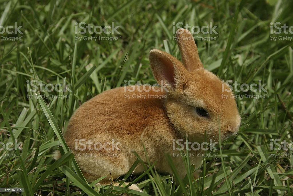 Summer Bunny stock photo