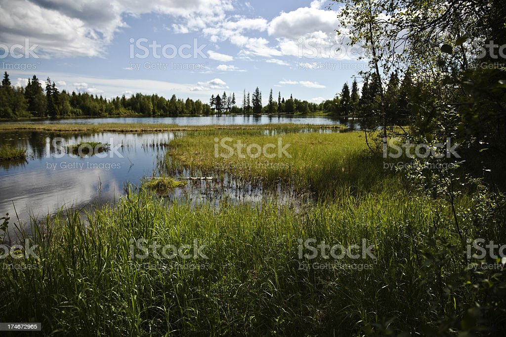 Summer by the lake. royalty-free stock photo