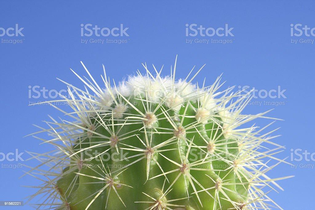 Summer Cactus royalty-free stock photo