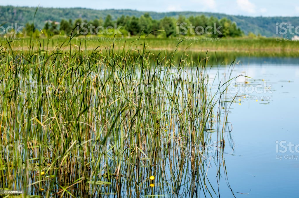 Summer clouds river reeds trees stock photo
