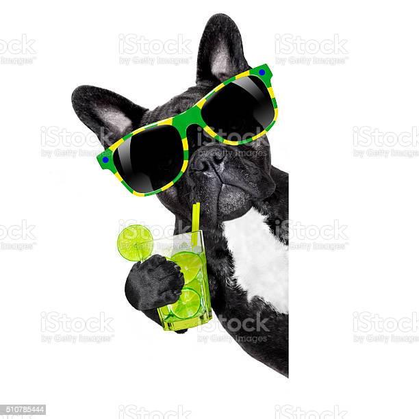 Summer cokctail dog picture id510785444?b=1&k=6&m=510785444&s=612x612&h=siy6kxgaocxbuojgaor4riuyippobtycgkpgzvtjvnw=
