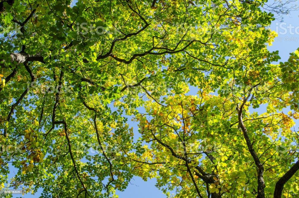 Sommer Farben in der Spitze der Bäume und blauer Himmel – Foto