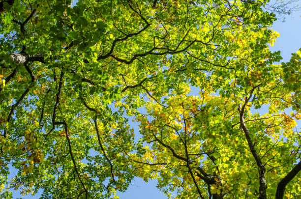 summer colors in top of trees and blue sky stock photo