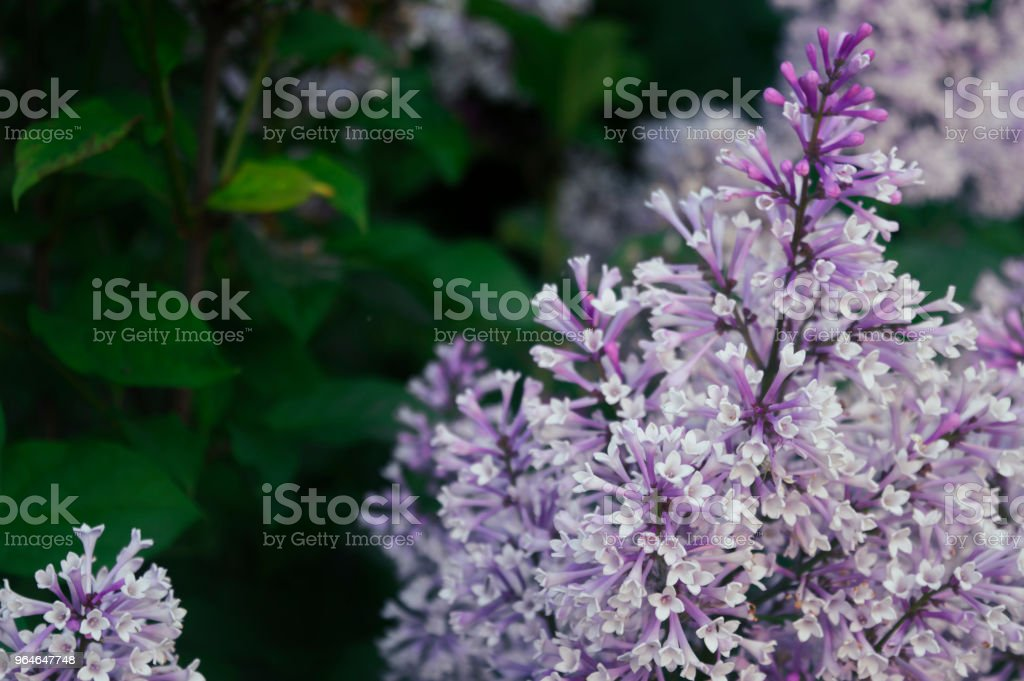 Summer colors royalty-free stock photo