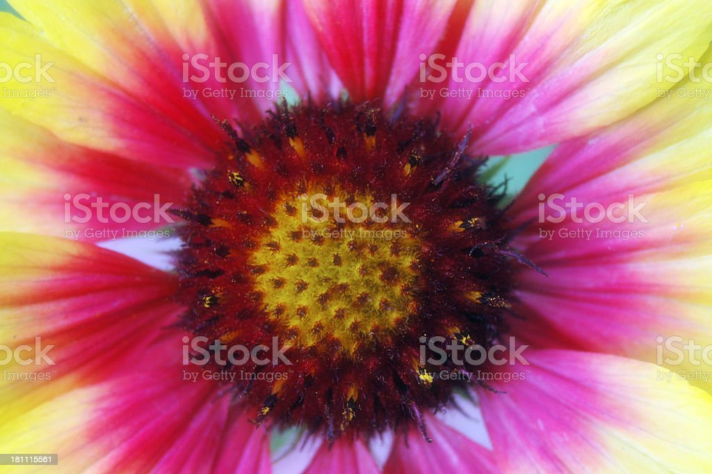 Summer colours stock photo