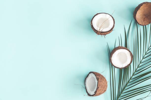 yaz bileşimi. coconut, palmiye yaprağı pastel mavi arka planda. yaz konsepti. düz lay, üst görünüm, kopyalama alanı - hindistan cevizi tropik meyve stok fotoğraflar ve resimler
