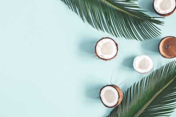 Summer composition. Coconut, palm leaf on pastel blue background. Summer concept. Flat lay, top view, copy space stock photo