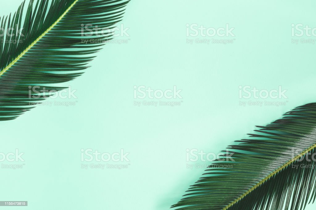 Summer composition. Palm leaves on mint background. Summer concept....