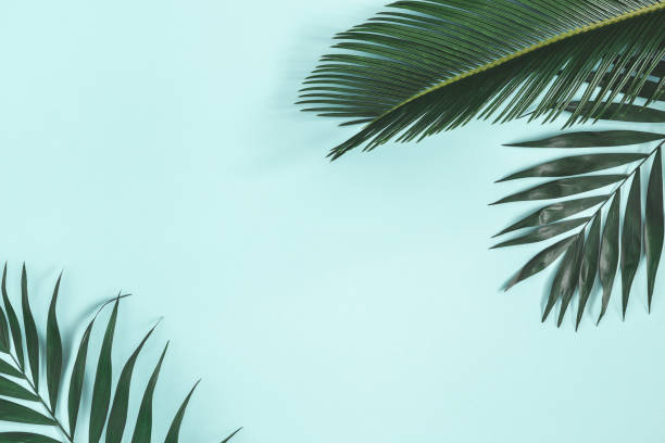 Summer composition. Palm leaves on pastel blue background. Summer concept. Flat lay, top view, copy space stock photo