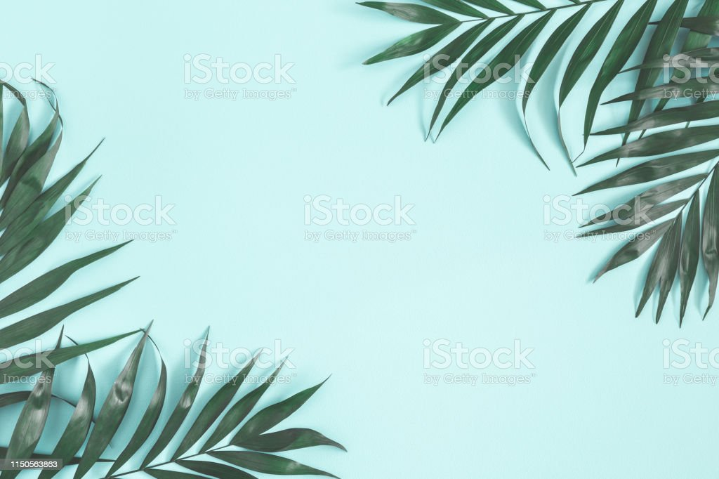 Summer composition. Palm leaves on pastel blue background. Summer concept. Flat lay, top view, copy space Summer composition. Palm leaves on pastel blue background. Summer concept. Flat lay, top view, copy space Above Stock Photo