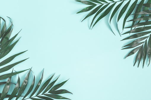 Summer Composition Palm Leaves On Pastel Blue Background Summer Concept Flat Lay Top View Copy Space Stock Photo - Download Image Now