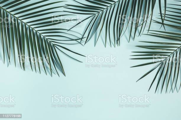 Summer composition tropical palm leaf on pastel blue background picture id1127775155?b=1&k=6&m=1127775155&s=612x612&h=rdpnizav6gqsw1g h5mk5oenbwdnrnqiwqrijeadbqk=