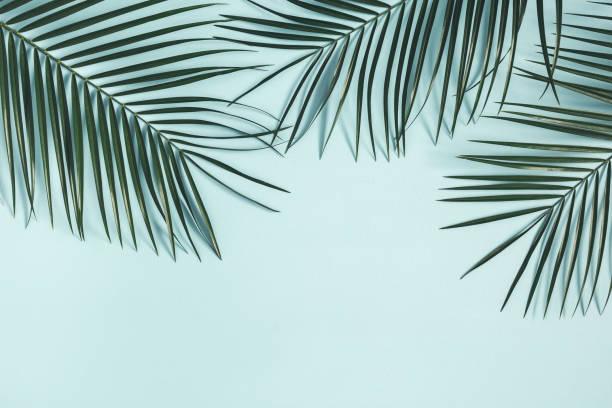 夏季作文。熱帶棕櫚葉在柔和的藍色背景。夏季理念。平面佈局、頂部視圖、複製空間 - 熱帶式樣 個照片及圖片檔