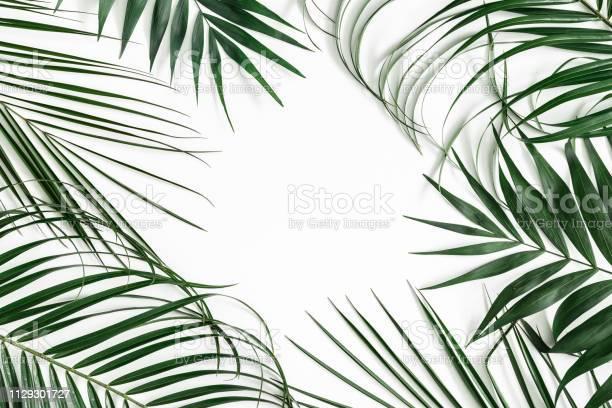 Summer composition tropical palm leaf on white background summer picture id1129301727?b=1&k=6&m=1129301727&s=612x612&h=zks frdgc6bbaegcjvx7jm6xye4qxb3pqoswhtdpiau=