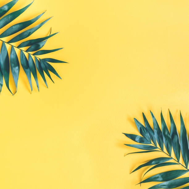 summer composition. tropical palm leaf on yellow background. summer concept. flat lay, top view, copy space, square - pastelowy kolor zdjęcia i obrazy z banku zdjęć