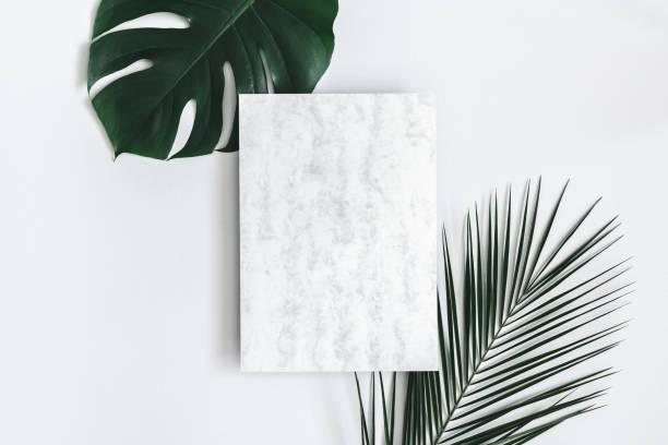 composizione estiva. foglie di palma tropicali, carta di marmo vuota su sfondo grigio pastello. concetto estivo. lay piatto, vista dall'alto, spazio di copia - flat lay foto e immagini stock