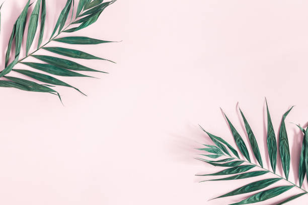 Summer composition. Tropical palm leaves on pastel pink background. Summer concept. Flat lay, top view, copy space stock photo