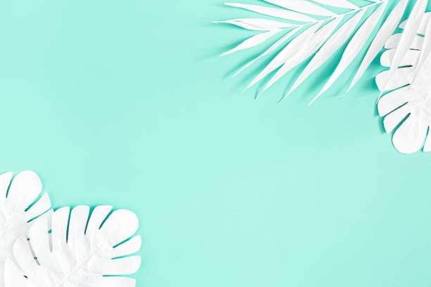 Summer composition. White palm leaves on mint background. Summer concept. Flat lay, top view, copy space stock photo