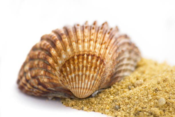 Summer concept : shells and sand isolated on white stock photo