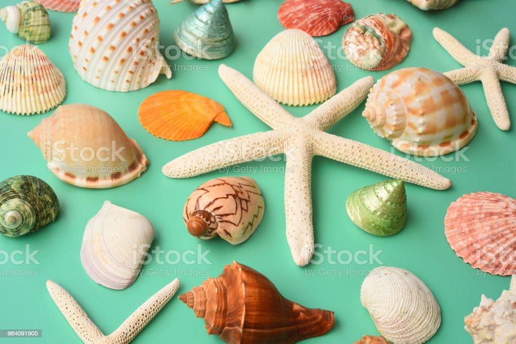 Summer concept. Starfish and seashells - Royalty-free Abstract Stock Photo