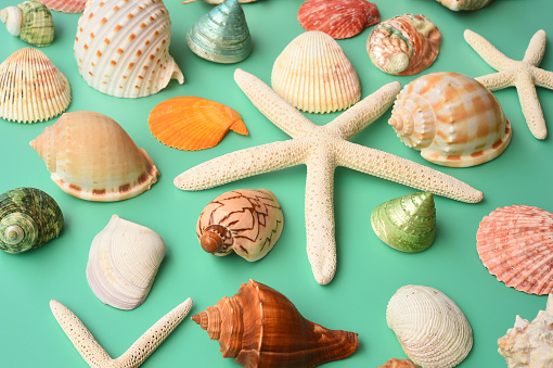 Summer Concept Starfish And Seashells Stock Photo - Download Image Now