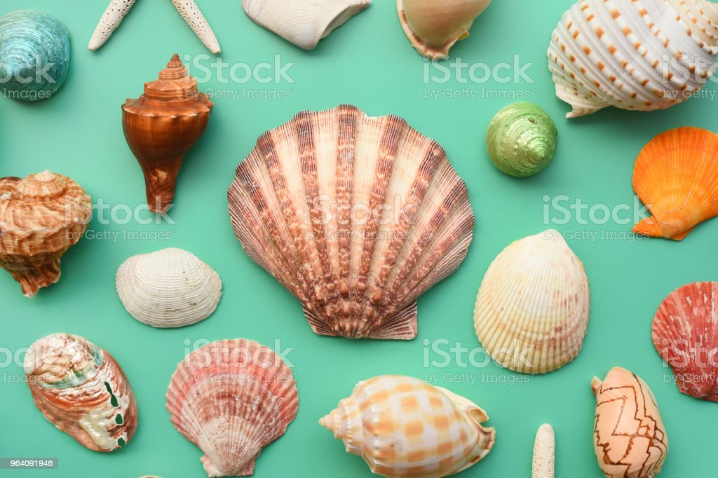 Summer concept. Starfish and seashells - Royalty-free Abstract Stock Photo