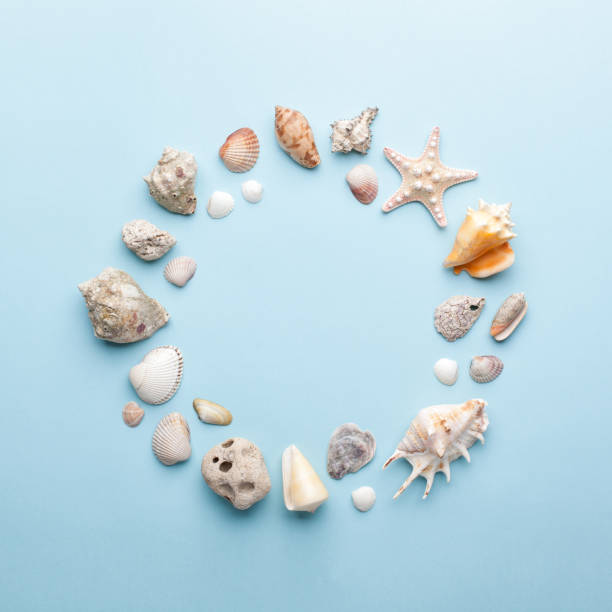 Summer concept with seashells and starfish on pastel blue background. stock photo