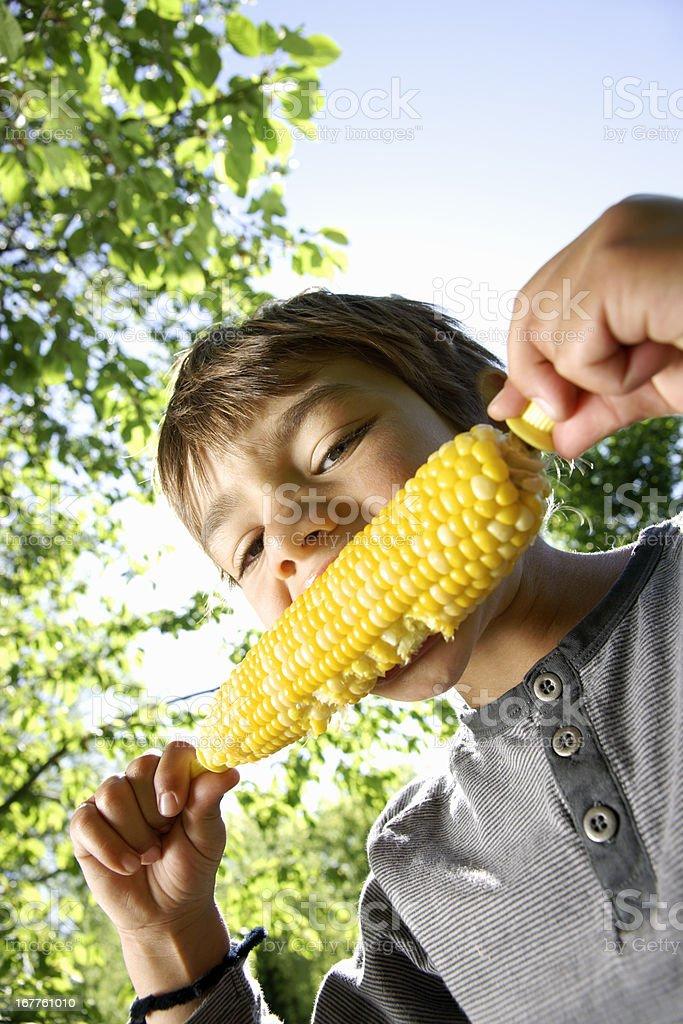 Summer corn of the cob royalty-free stock photo