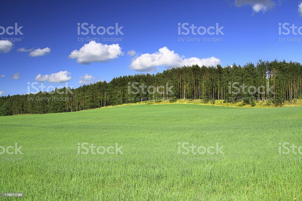 summer country view stock photo