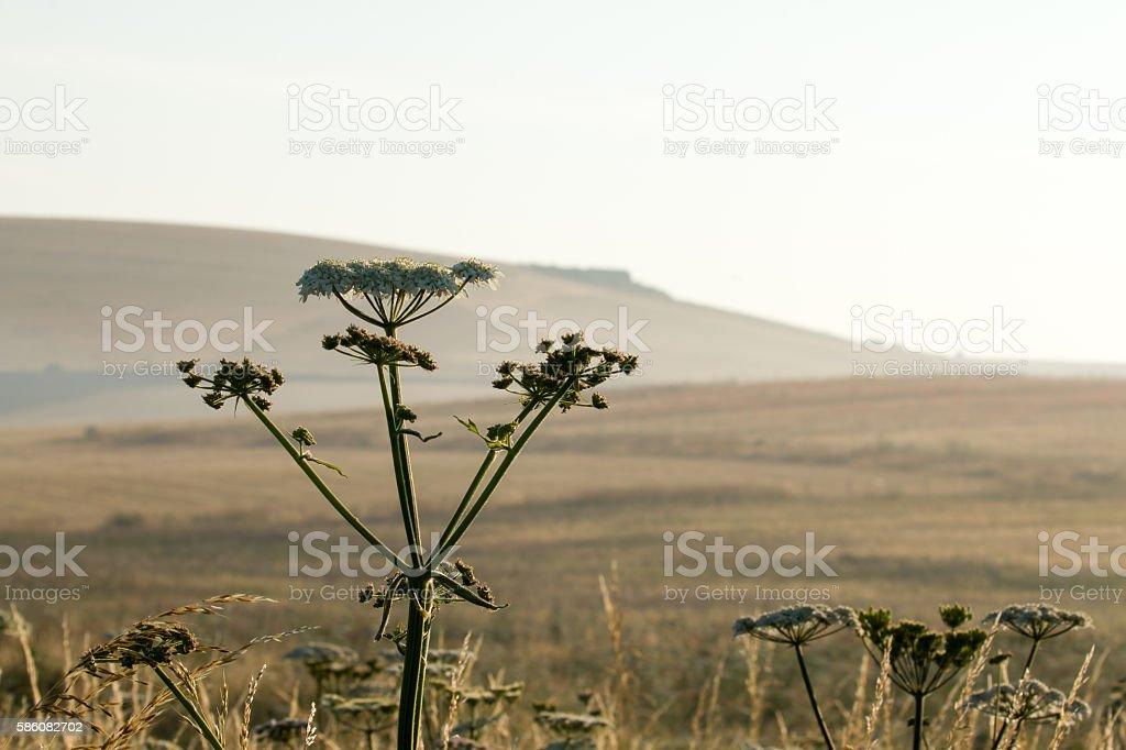 Summer Countryside Scene stock photo