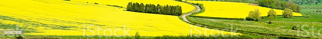 Summer crops country road royalty-free stock photo
