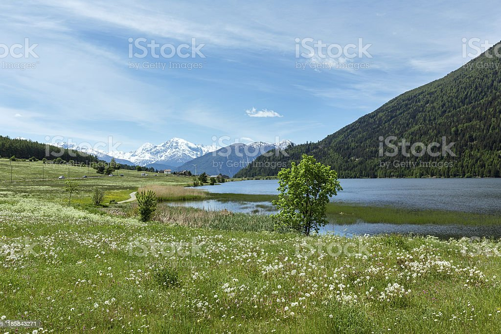 Summer dandelion meadow (Italy). royalty-free stock photo