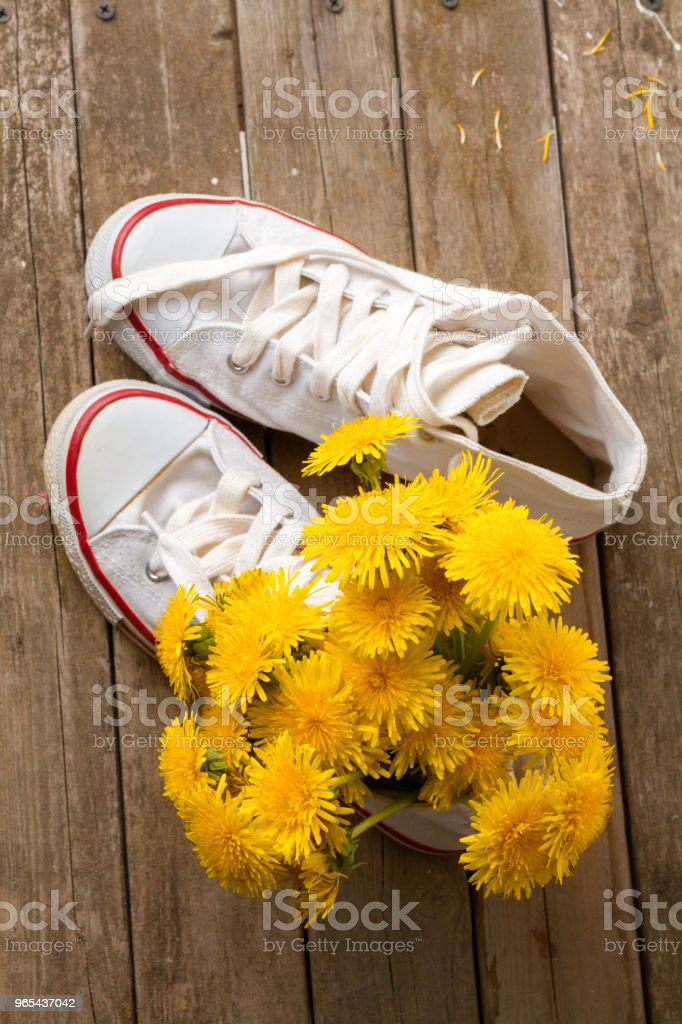 summer dandelions in white sneakers royalty-free stock photo