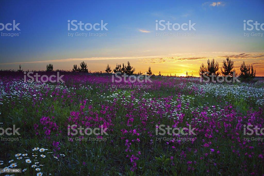 summer dawn royalty-free stock photo