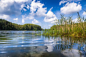 Summer day at a forest lake