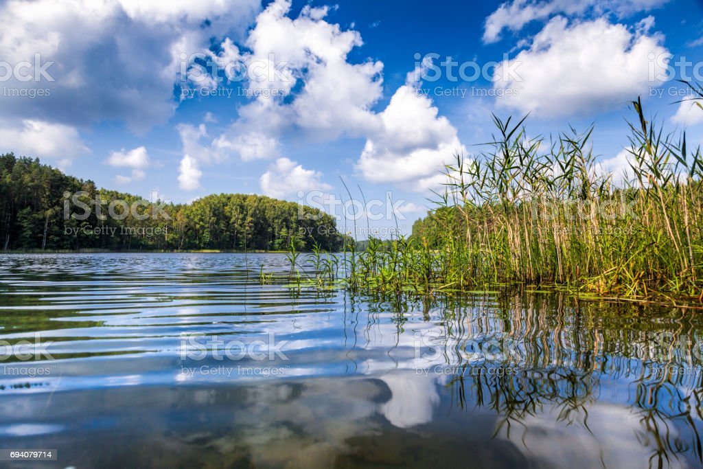 Summer day at a forest lake stock photo