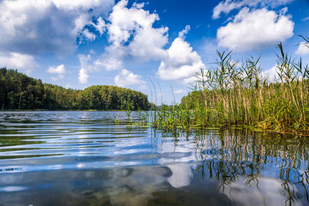 Summer day at a forest lake Summer landscape with sunny forest lake riverbank stock pictures, royalty-free photos & images