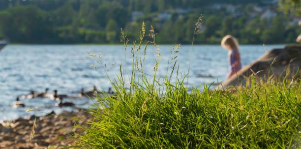 en sommardag 2018 - bohuslän nature bildbanksfoton och bilder
