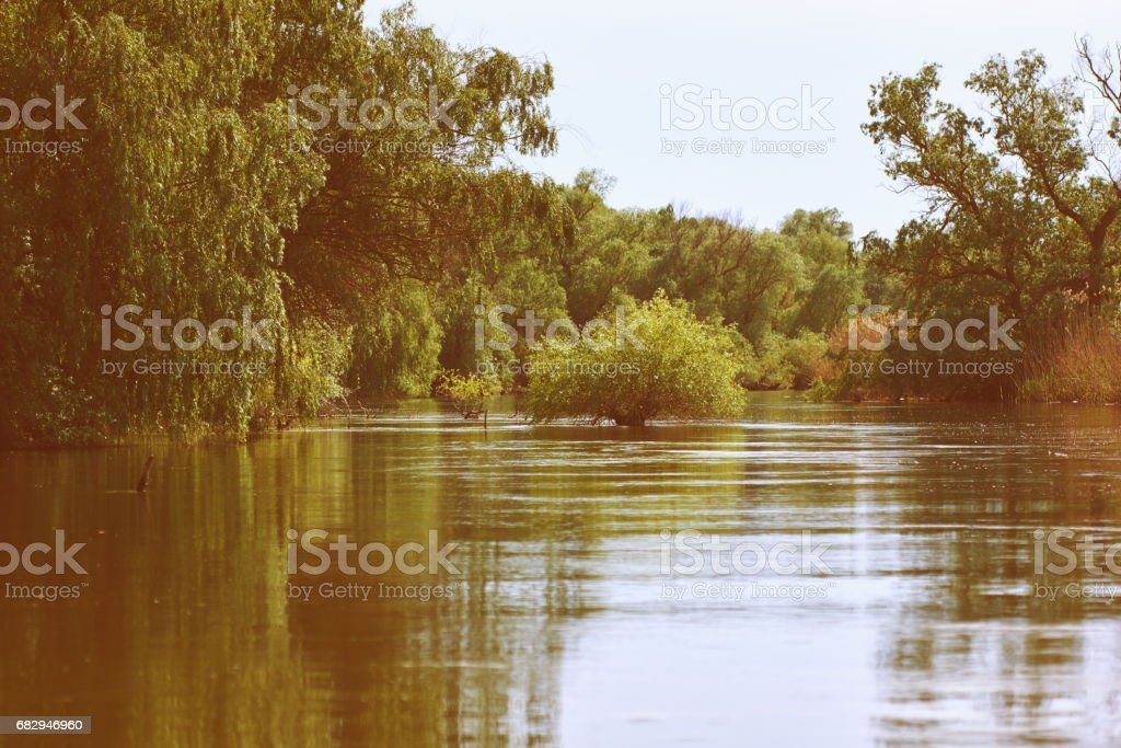 summer day in Danube Delta royalty-free stock photo