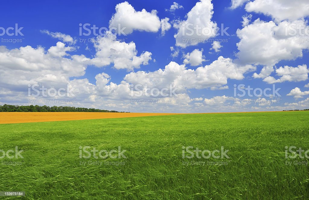 Summer day on the green field stock photo